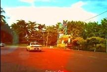 My harinezumi video / All video in this board are taken using digital harinezumi camera