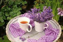 Coffee, Tea or me... / by Tammy Crockett Belcher