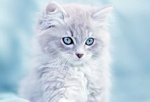 MEOW / Cats ...