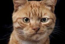 cats  2 / by eva gutenberg