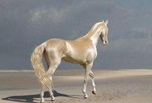 Horses Amazing