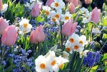 Dazzling Mixtures / Stunning combinations, flower bulbs