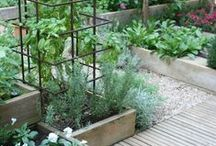 Vegetable and Herb Gardening