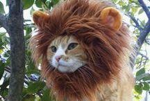 Carnaval Animal / Carnaval Animal