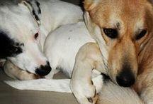 dogs my angel s