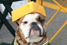 Four-Legged Fans / Animals and sports... because sports aren't just for humans.