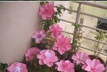 kukkia/flowers