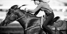 AnimalS_ Horses +Riders