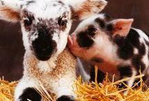 ★ ☆ •°*°• Animal Bonding •°*°• ☆