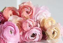 Flower&Beautiful