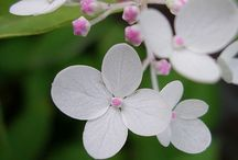 Hydrangea Love / My favorite flower