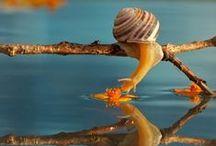มหัศจรรย์แห่งชีวิต / ชีวิต / by กลอนธรรมะ กลอนรัก กลอนคติชีวิต บทความจรรโลงใจ