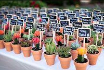 succulentus / 'cos i love it