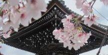 {north asia} / travels through Japan, China, Mongolia, etc.
