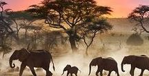 {africa} / travels around the african continent - kenya, namibia, south africa