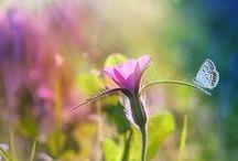 Verdure & floraison.