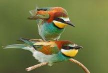 Viaje ornitológico por Europa / Organizamos viajes ornitológicos para aficionados o expertos por las reservas naturales de Bulgaria acompañados de un especialista local