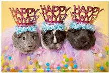 Guinea Pigs Happy New Year! / HAPPY NEW YEAR from your cavy friends at the guinea pig calendar company!