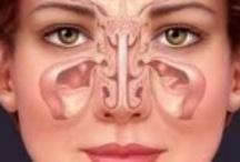 Sinus + Nose + Jaw