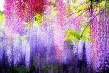 flowers / お花 / by Kazumi Iitaka