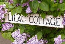 Lilac & Lavender Cottage / Shabby decorating ideas for your home! / by Willow ~