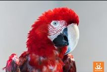 ♡ Parrot Garden ♡ / Many of the parrots here have been through many homes, and many have special needs to boot, but at Parrot Garden, they can rest and heal. Take a look at some of the residents who make the Parrot Garden such a magical place.