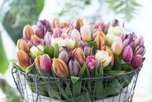 Springtime & Easter