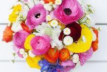 i colori della primavera / the colors of spring
