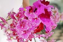 Orchards / Flowers for wedding