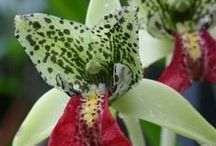 Orchids for the Hothouse