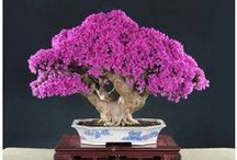 Bonsai & Ikebana / by Willow ~