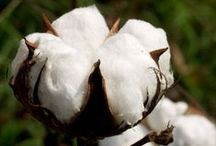 Cotton / I am interested in everything about cotton. You will see a little bit of that on this board.
