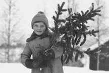 Oh Christmas Tree / I do love Christmas Trees!