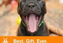 ♡ Gift Ideas for Pet Lovers ♡ / Unique gifts for pet lovers!