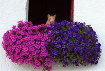 Balcony/container gardening