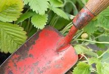Ruby's Red Garden / Gardening