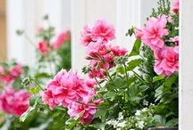 Window Boxes and Container Planting / by serendipity patch