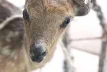 O, ... precious! / by gizelle.