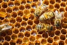 Bees & Honey / by Laughing Crow Studio (Charlene Kingston)