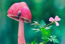 Shrooms, Fungi, Moss and Lichens❦ / mushrooms, fungi, shrooms, gardens, nature