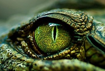 Frogs, Toads, Reptiles & Snails  / Frogs, Toads and reptiles, snails, slugs / by †☠Mystical Enchantments☠†