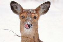 Winter Wonderland❅❉ ☃ / snow, snowflakes,wildlife, icicles, falling snow, winter, winter wonderland  / by †☠Mystical Enchantments☠†