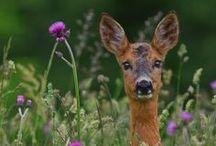 Deer, Elk and Fawn L❤ve / deer, elk, fawn,  / by †☠Mystical Enchantments☠†