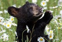 Bear ❤  / bear, black bear, brown bear, bear cub, bear cubs,grizzly bear / by †☠Mystical Enchantments☠†