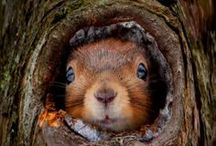Rodents & Mammals / rodents, mammals, squirrels / by †☠Mystical Enchantments☠†