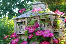 Bird Nests,Eggs and Houses / birds, birds nest, nests, bird eggs, eggs / by †☠Mystical Enchantments☠†