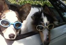 Dogs / All things friendly, smart, faithful & four-legged