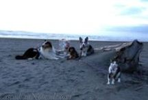 Cascadian Nomads / Some of the best posts from our award winning pet adventure blog.