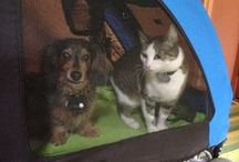 """Cats vs. Dogs & Cats ❤ Dogs / """"Dogs and cats, living together! Mass hysteria!"""""""