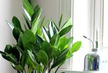 House Plants & Indoor Gardening / Finding great houseplants to enjoy over the winter and anything you can grow indoors.
